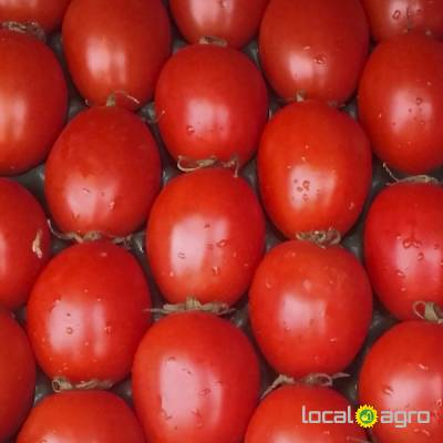 Agriculture Advert: Fresh PLUM tomatoes from Tunisia image in the Advert list
