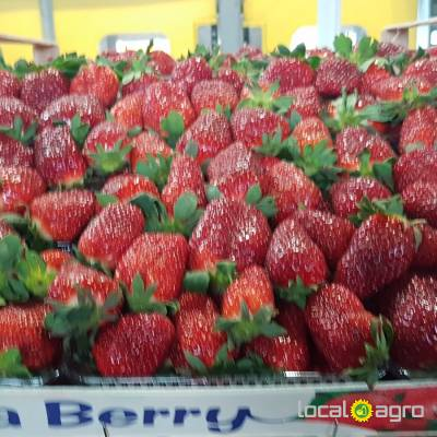Agriculture Advert: Fresh strawberry Greece (box 5kg) image in the Advert list