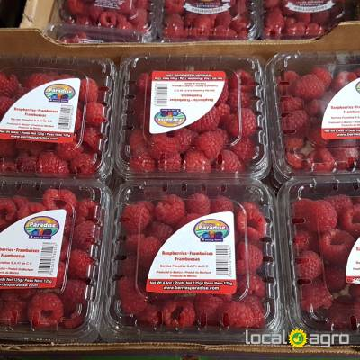 Agriculture Advert: Raspberries from Mexico (1 box 125g) image in the Advert list