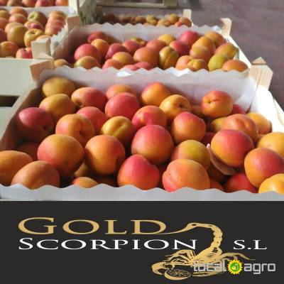 Agriculture Advert: We sell apricots from Spain image in the Advert list