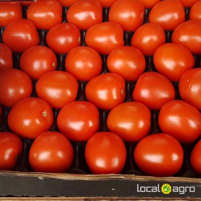 Agriculture Advert: Tomatoes plum Portugal (1box-6kg) image in the Advert list