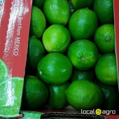 Agriculture Advert: Fresh limes from Mexico (box 4kg) image in the Advert list