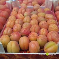 Apricotes from Spain (box-5kg)
