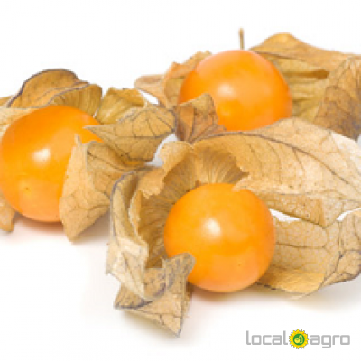 Agriculture Advert: Physalis image in the Advert list