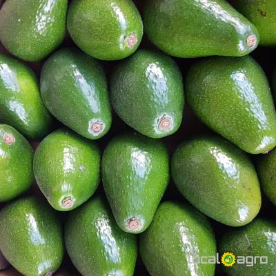 Agriculture Advert: Avocado from peru (1 box 4kg) image in the Advert list