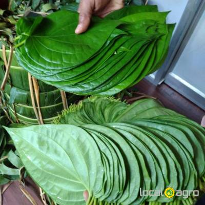 Agriculture Advert: Fresh betel leaves image in the Advert list