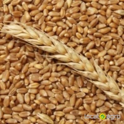 Agriculture Advert: Пшеница, закупаем ЮФО,ПФО,СКФО image in the Advert list