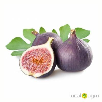 Agriculture Advert: Figs image in the Advert list
