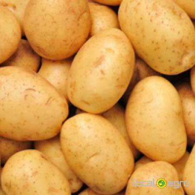 Agriculture Advert: A Grade fresh potatoes for Sal image in the Advert list