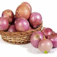 Onion grade 'Legacy'