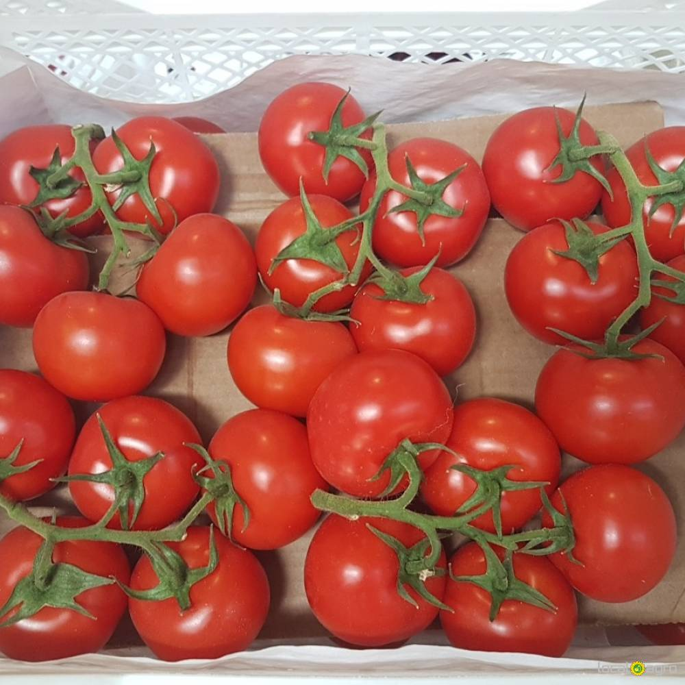 Fresh ans tasty tomatoes