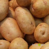 Potatoes Russia