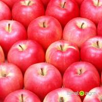 Red apples from Serbia