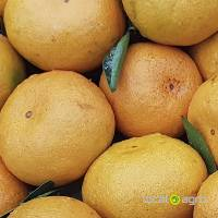 Mandarins from China
