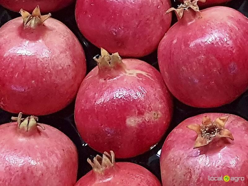 Российская доска объявлений фруктов доска объявлений куплю продам москва