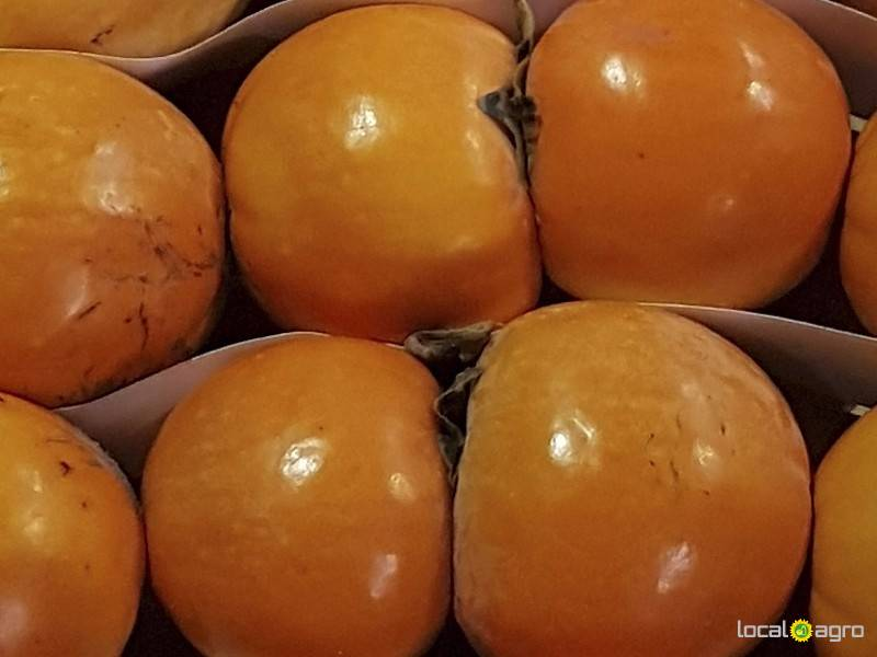 Persimmon from abkhazia fruits moscow free for Abkhazian cuisine