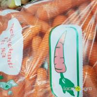 Fresh carrot from Poland
