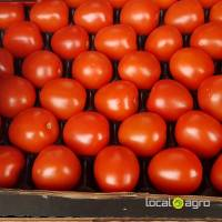 Fresh plum tomatoes Spain