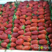 Strawberry fresh from Greece