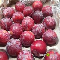 Fresh plums from Israel