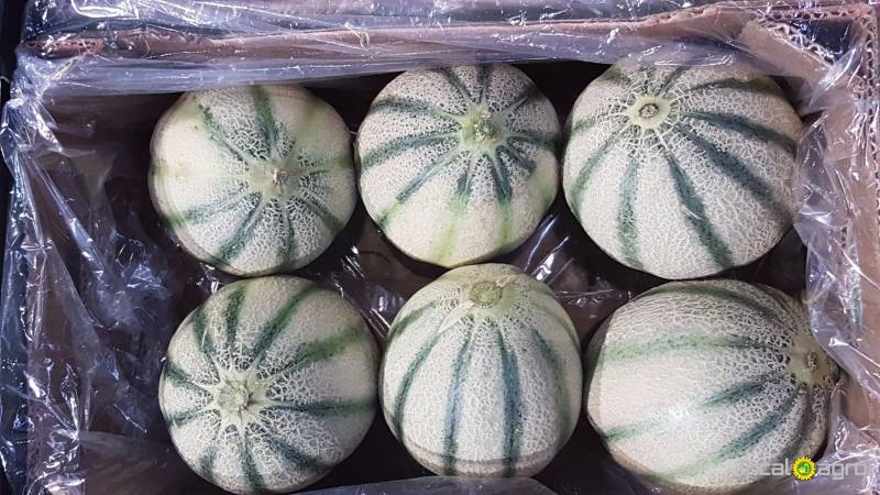 Melons from Brazil (cantalupa)