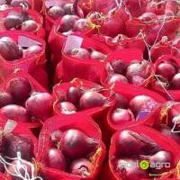 Red Onions from Algeria