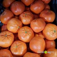 Mandarins (fresh) from Egypt
