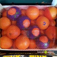 Spanish oranges (fresh)