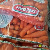 Fresh Carrots (new crop) Belorussia