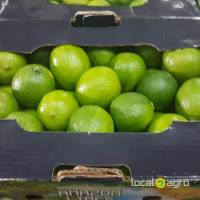 Fresh LIMES from Brazil