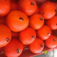 Sell orange from Spain