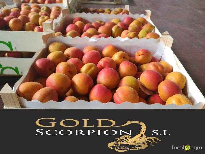 We sell apricots from Spain