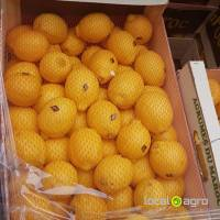Fresh Lemons from Morocco
