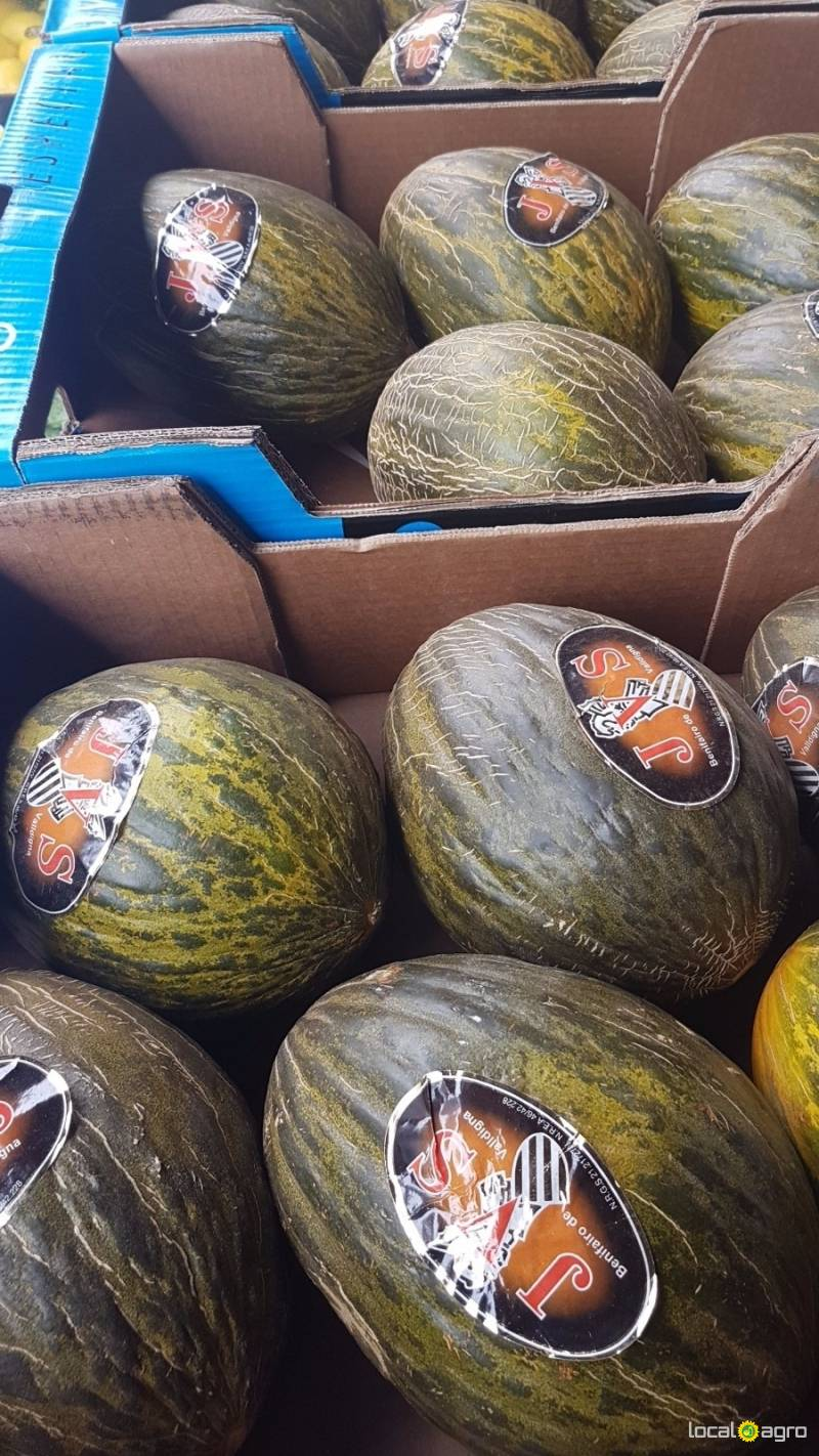 Fresh melons (new crop) from Yemen -1pc