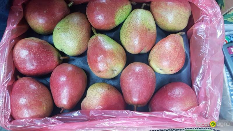 Pears from Argentina (red 1box 14 kg)