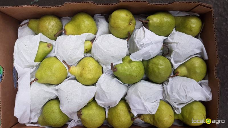 Pears from Argentina (box 14 kg)