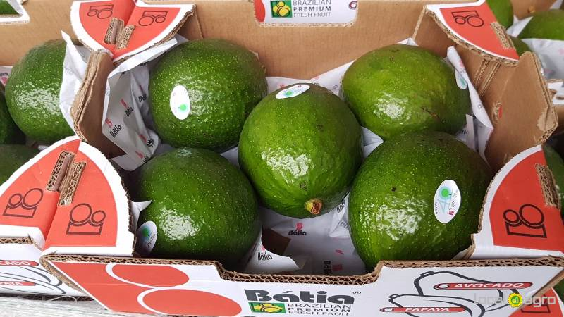 Large avocados from Brazil (box 4kg)