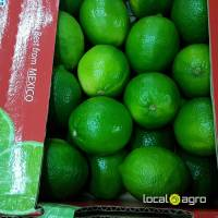 Fresh limes from Mexico (box 4kg)