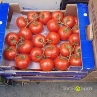 Turkish branch tomatoes