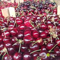 Cherries from Serbia