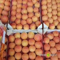Apricots from Turkey