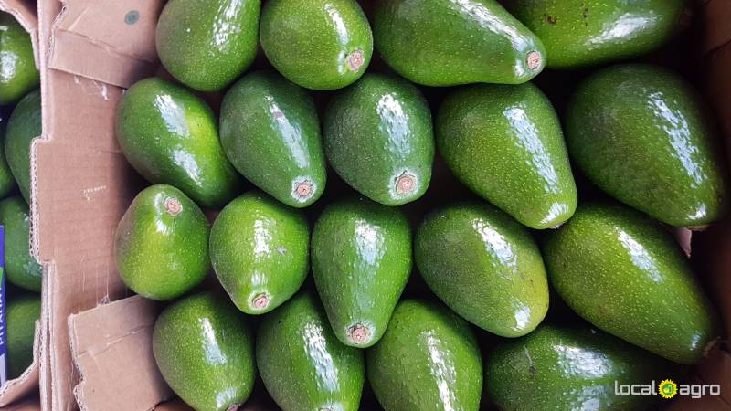 Avocado from peru (1 box 4kg)
