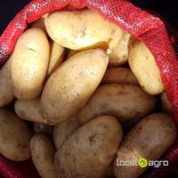 Potatoes from Egypt